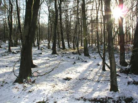 winter-woods